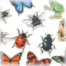 magneti cu insecte, animale, pasari, frigder, biologie, fauna
