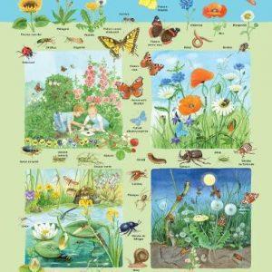 Plansa – flora si fauna din campie