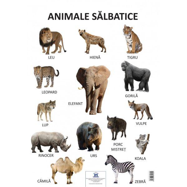 Plansa animale salbatice, planse educative copii, dph, animale salbatice, poster animale, planse educative copii