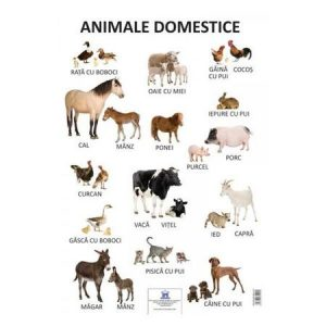 Plansa – Animale domestice