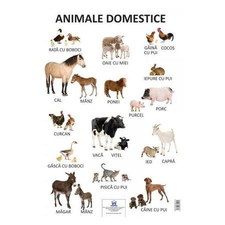 Plansa - animale domestice, planse educative copii, dph, animale domestice, poster animale, planse educative copii