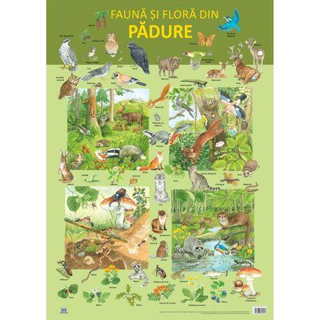 Plansa - flora si fauna din padure, planse educative copii, dph, animale din padure, plante din padure, planse animale copii, bebelind